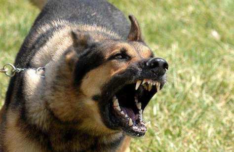 儿童遭狗咬后身亡犬主人负什么法律责任?